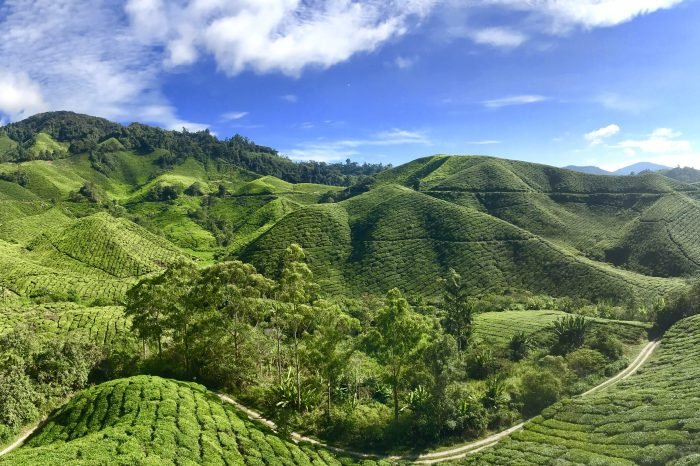 2H1M – Cameron Highlands